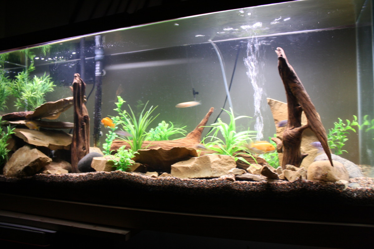 tips for a low maintenance fish tank pethelpfullarger tanks are actually easier to maintain