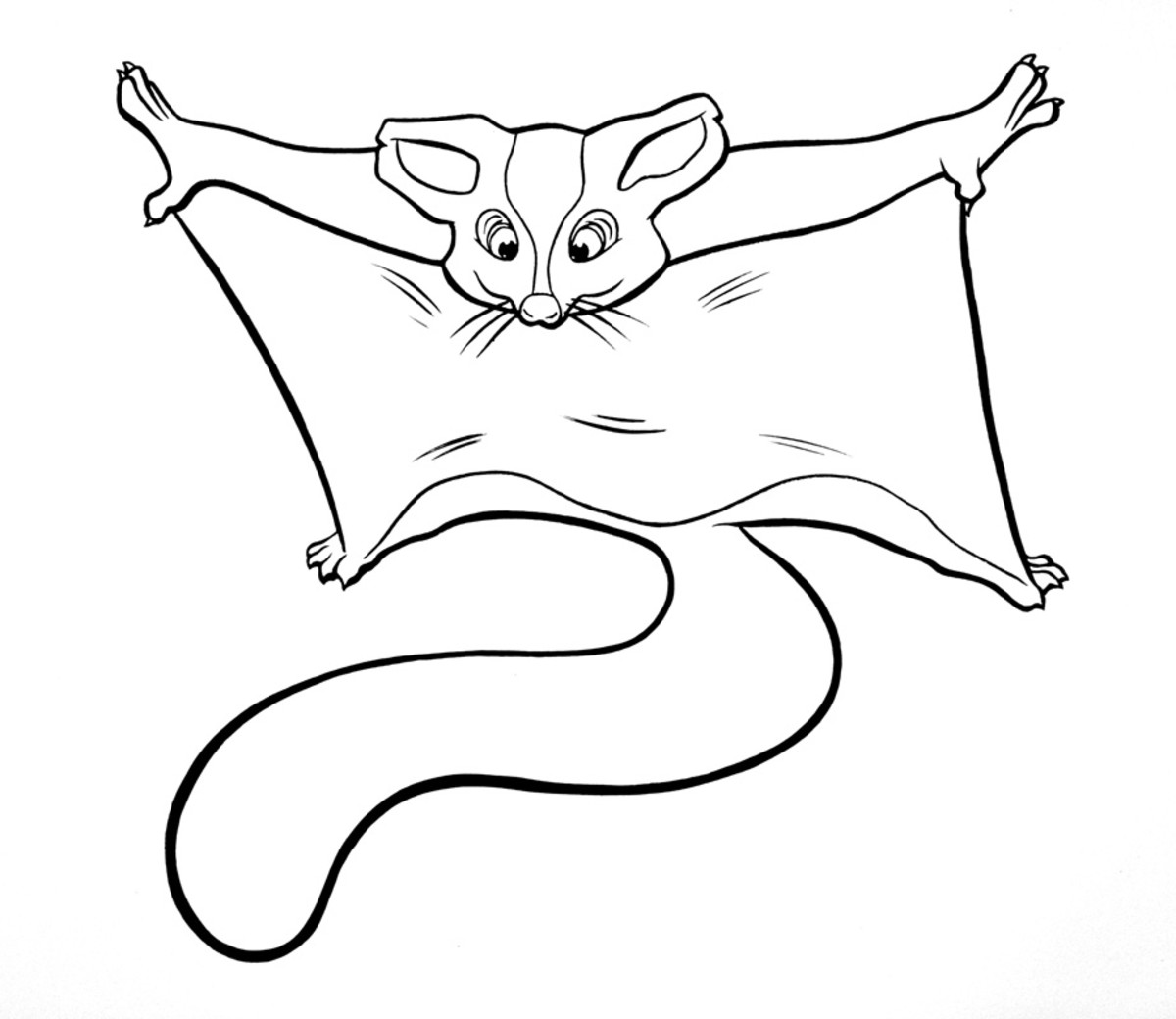Sugar glider coloring page. Print out for your child.