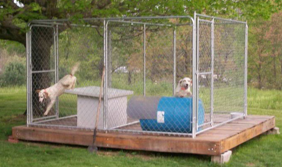 Adjoining dog runs on a raised wooden platform built to house two pets.