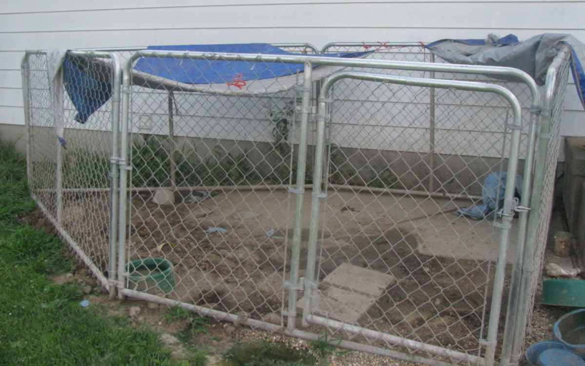 This outdoor dog run needs a new top and a good kennel flooring solution!