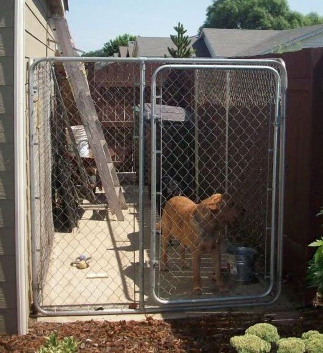 Pooch in pre-fab chain link dog run.