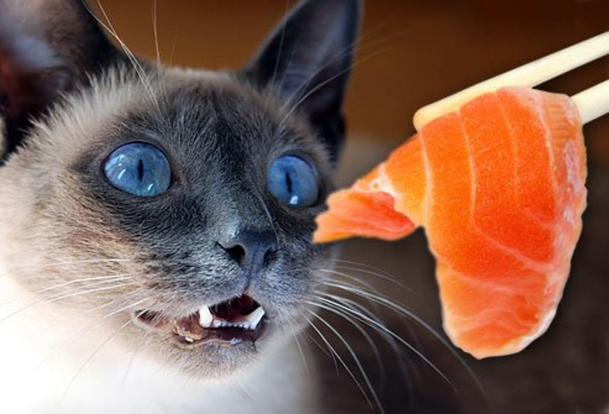You want to be cautious when giving your cat raw fish or meat.