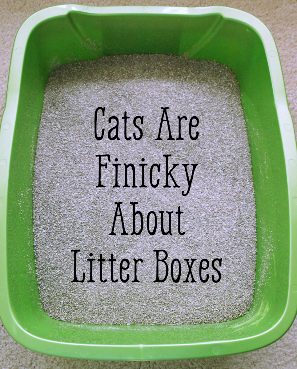 The problem might be the litter box itself.