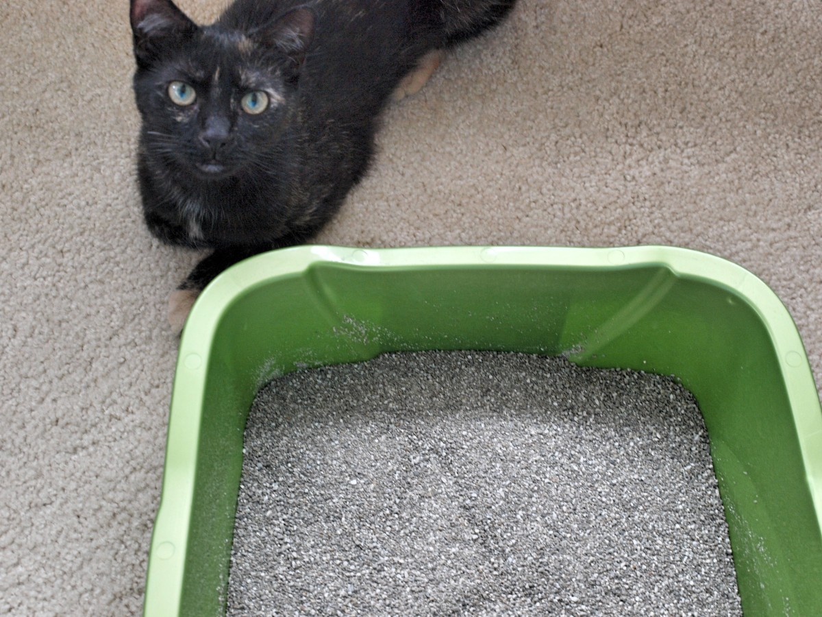 It's time to retrain your cat to use the litter box