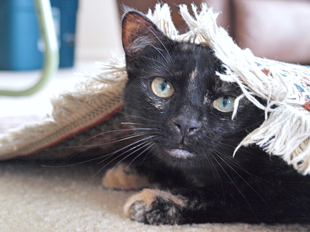 What if your cat won't use the litter box?