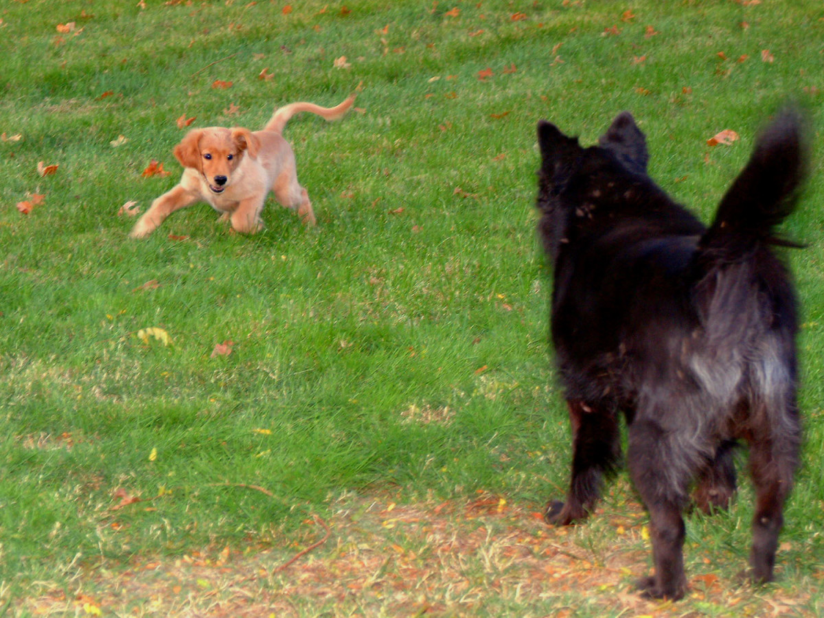"A little puppy back-talk to the elder! ""Catch me if you can!"""