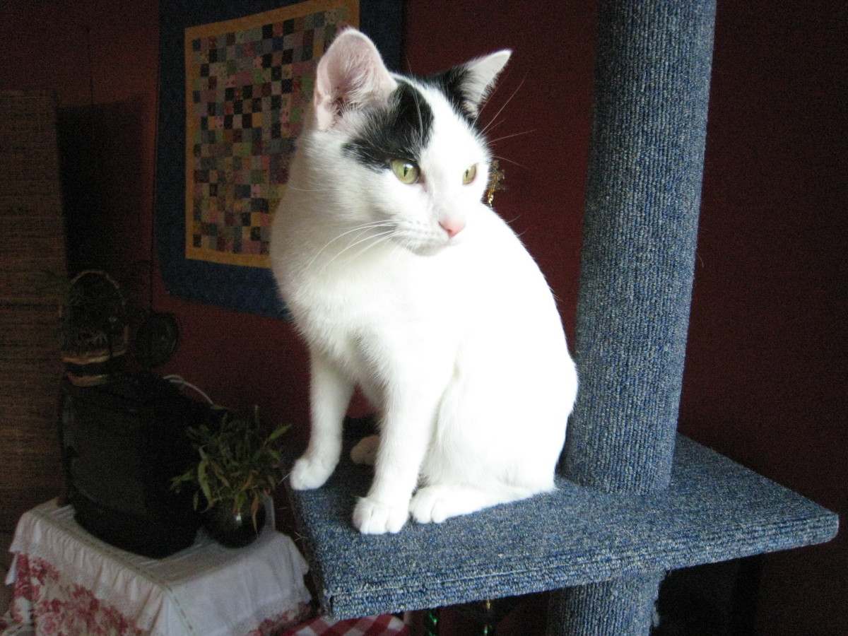 Training Your Cat To Wood Pellet Litter Pethelpful