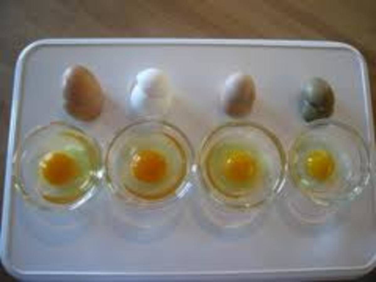 Egg shell color and egg size can differ from breed to breed.
