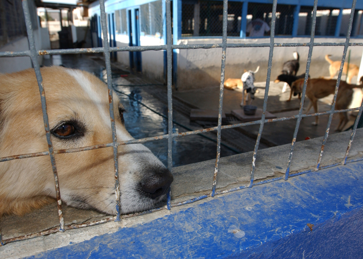 A sanctuary for abused animals.