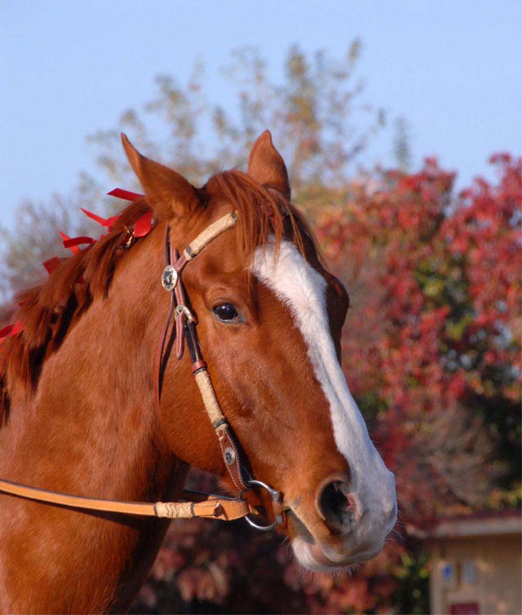 Horse Used by permission. All photos in this section courtesy of: Tammy Mallett: Photography by Tammy: www.picsbytammy.com
