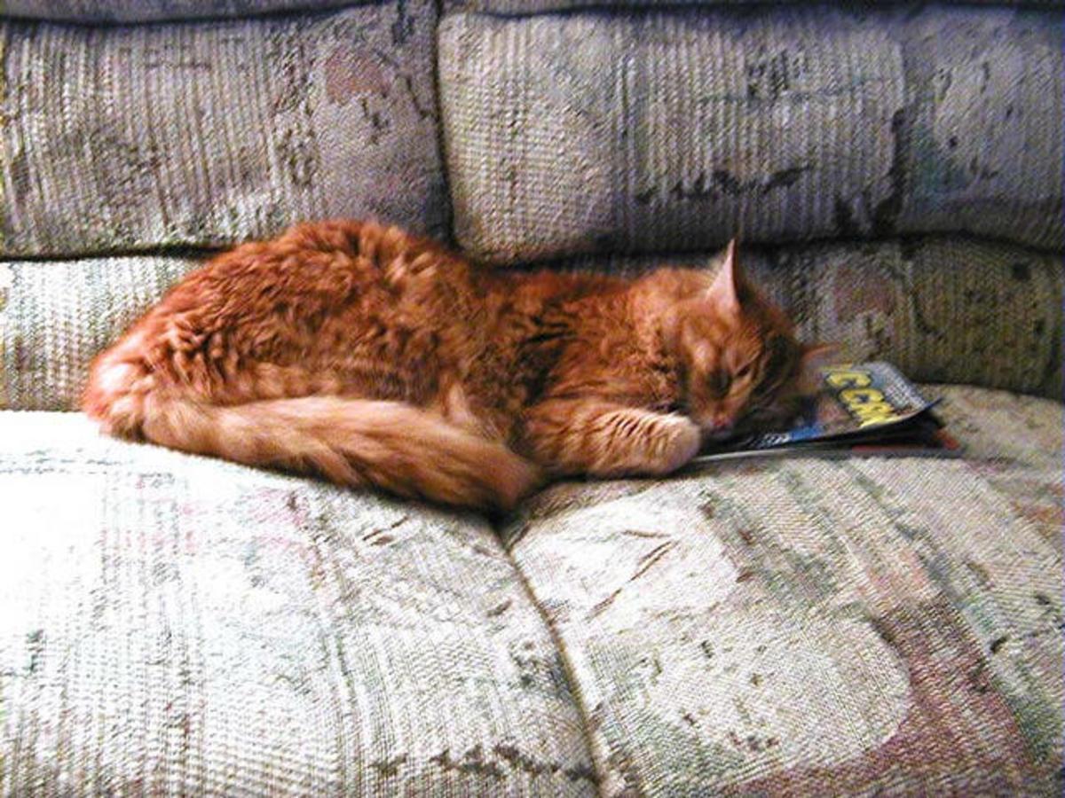 Tigger falls asleep reading.