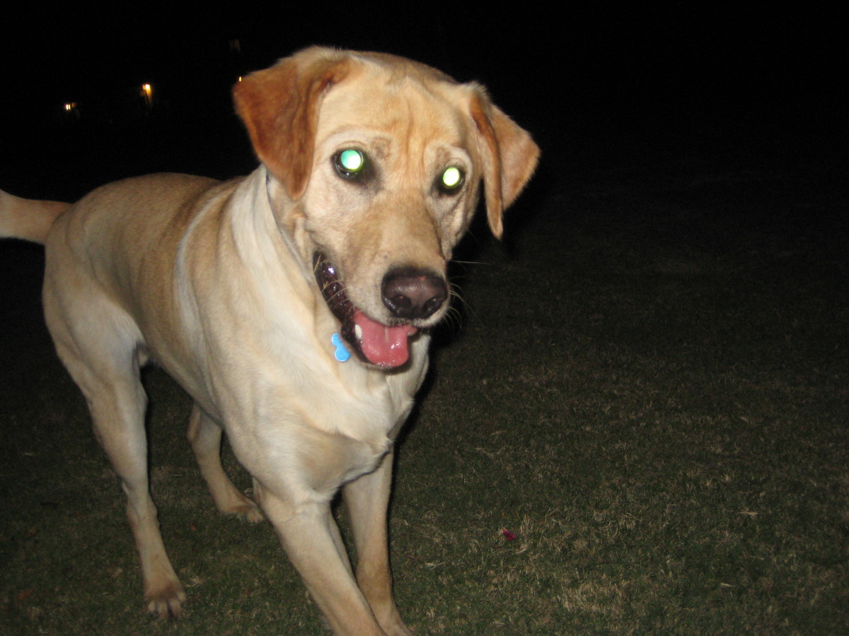 """Our crazy """"Charliedog"""" is quite active and has no physical problems today."""