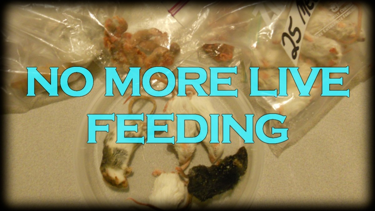 Feeding Pets Live Food is Cruelty