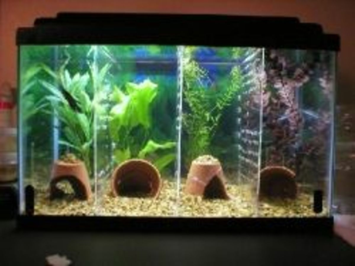 How to set up a betta tank pethelpful for Betta fish tank size