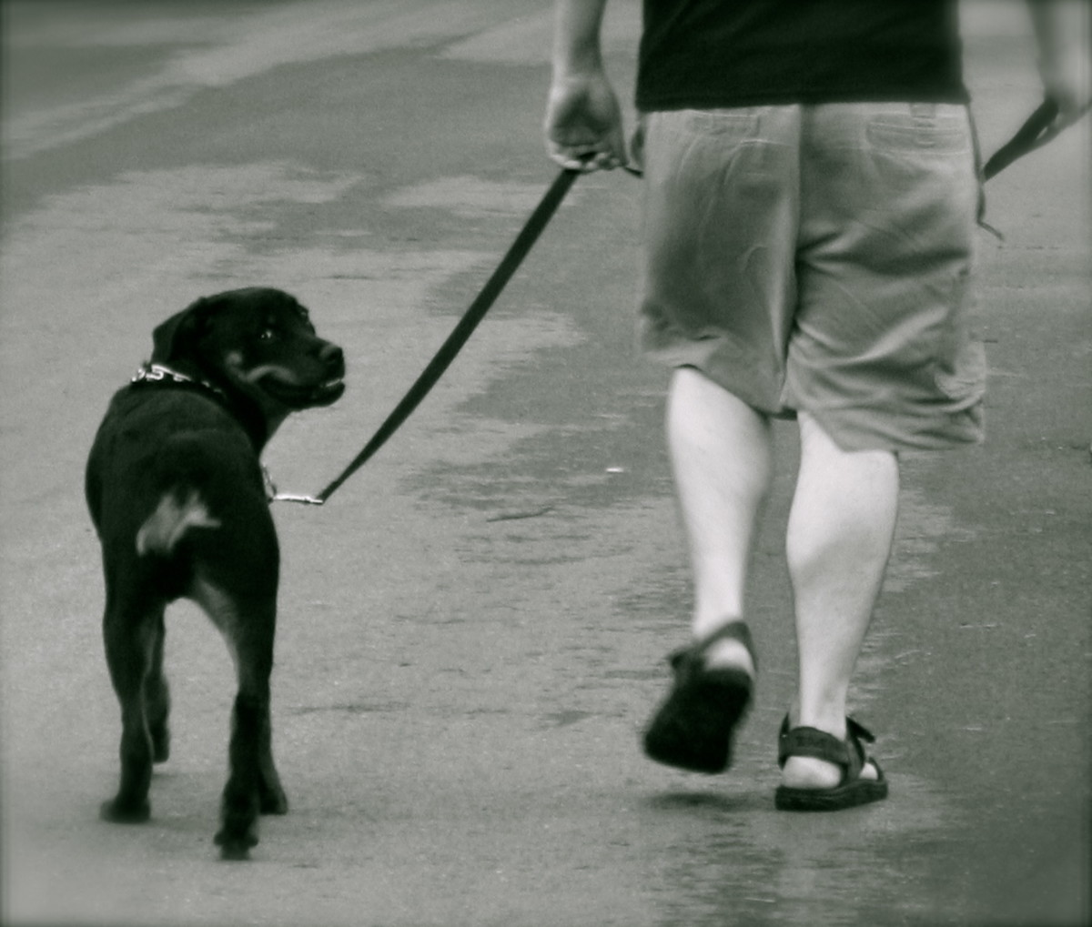 Taking the dog for a walk on a regular basis, will help your pup behave better in the house.