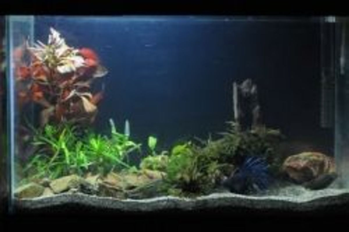 best betta tank setup