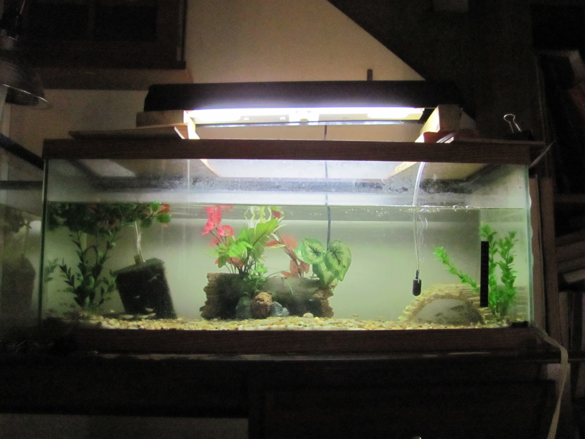 Why are glass aquariums so expensive for 20 gallon fish tank decoration ideas