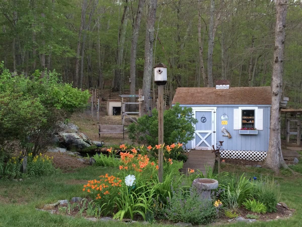 backyard-birds-