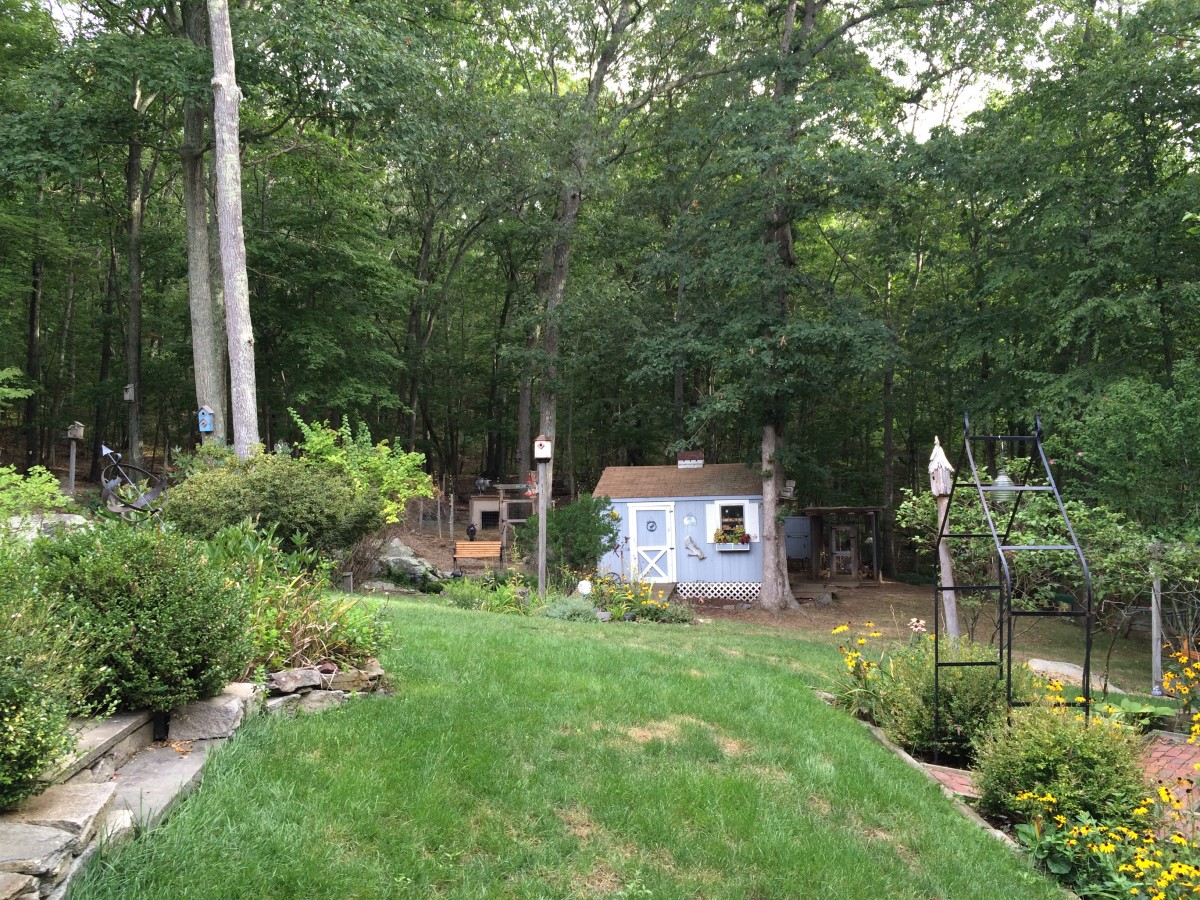 Our backyard offers the birds a variety of foods, water, nesting sites and protection from the elements.