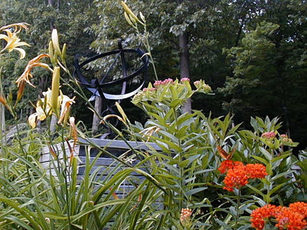 A variety of plants and flowers feed the birds and attracts butterflies
