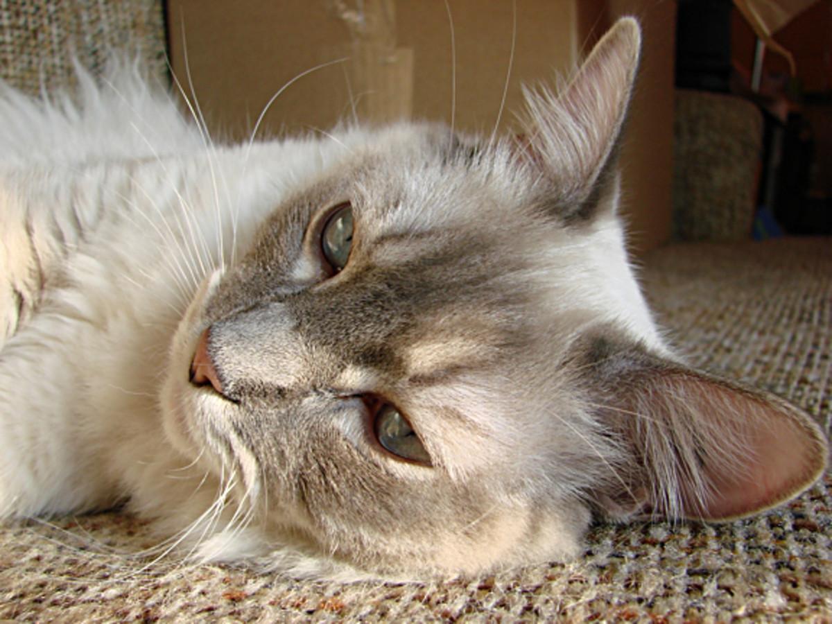 Bennie relaxing