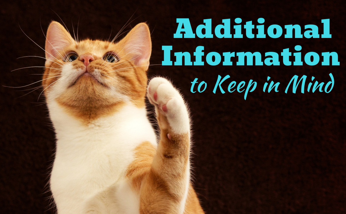 what-is-your-cat-really-trying-to-tell-you