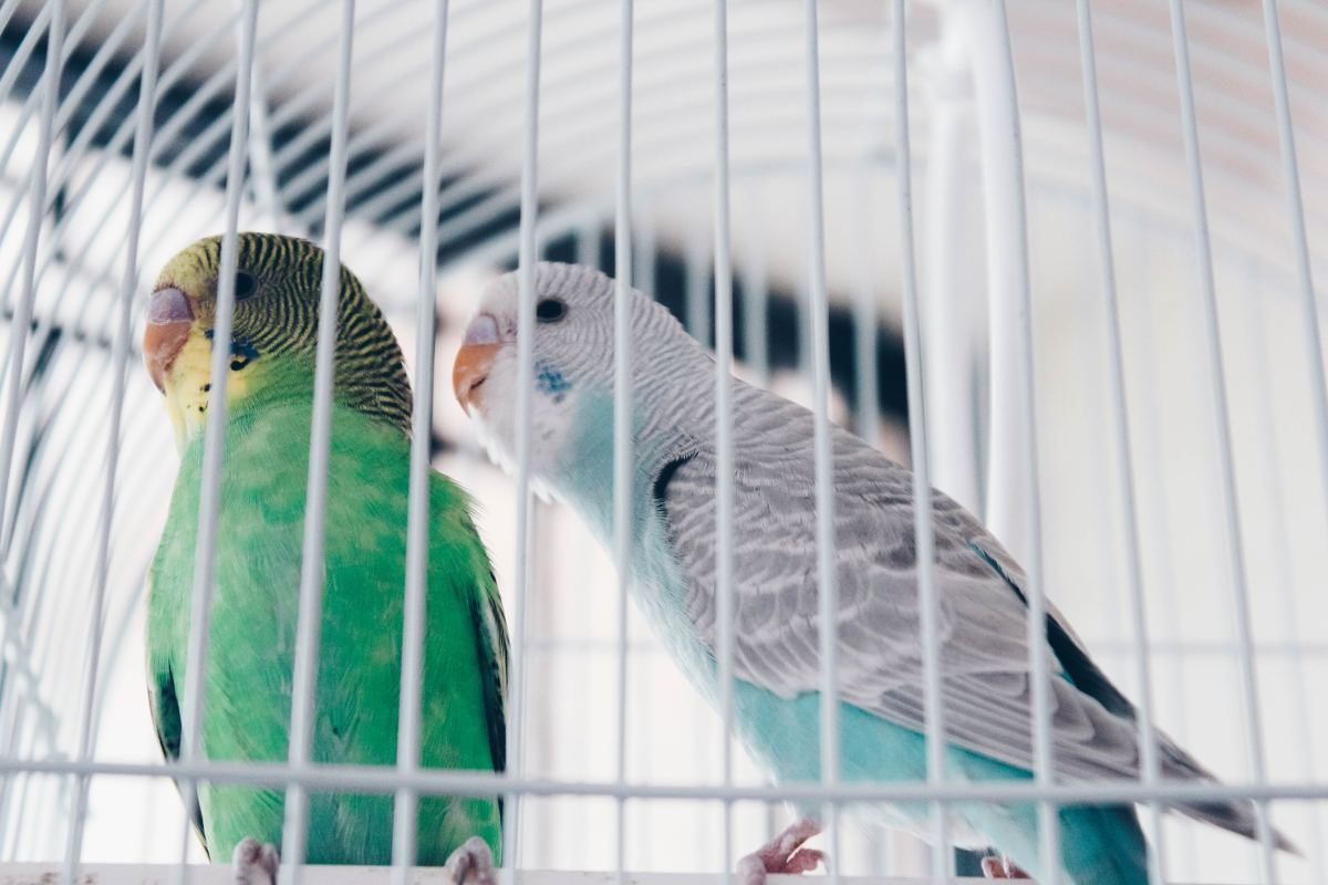 Seeds get old—keep your parakeet's diet fresh and interesting with nutritious treats.