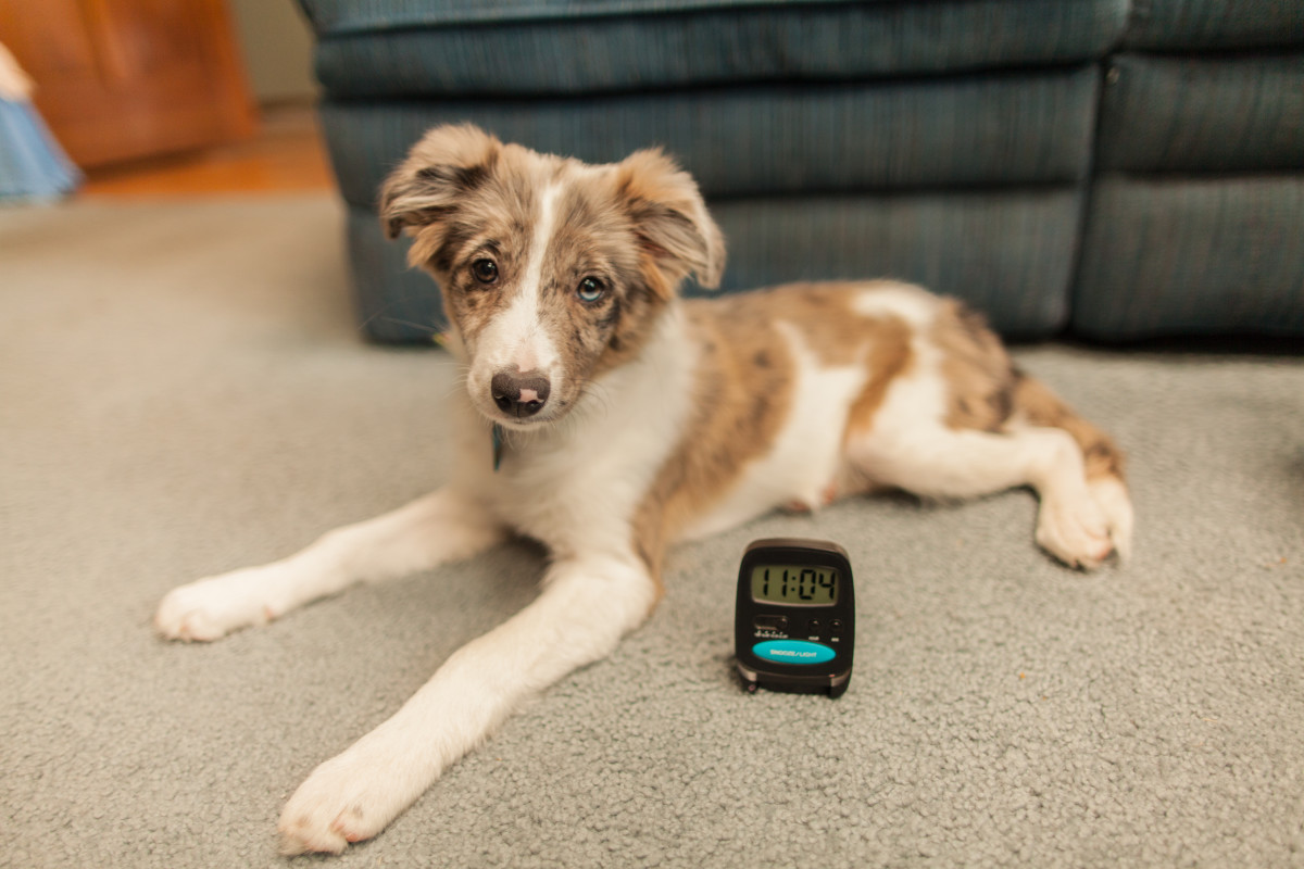 A timer is a great tool for house training your puppy.