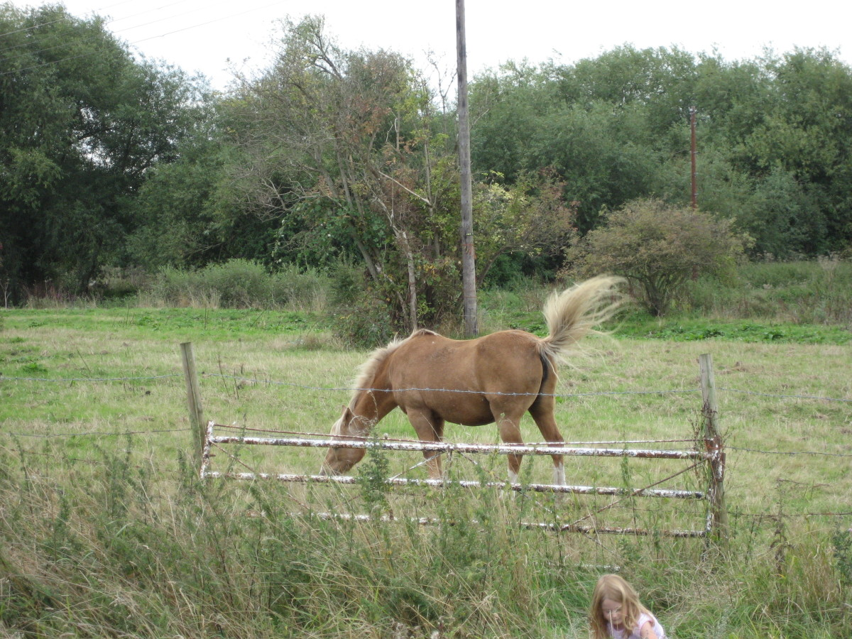 signs you are dealing with a backyard horse breeder hubpages