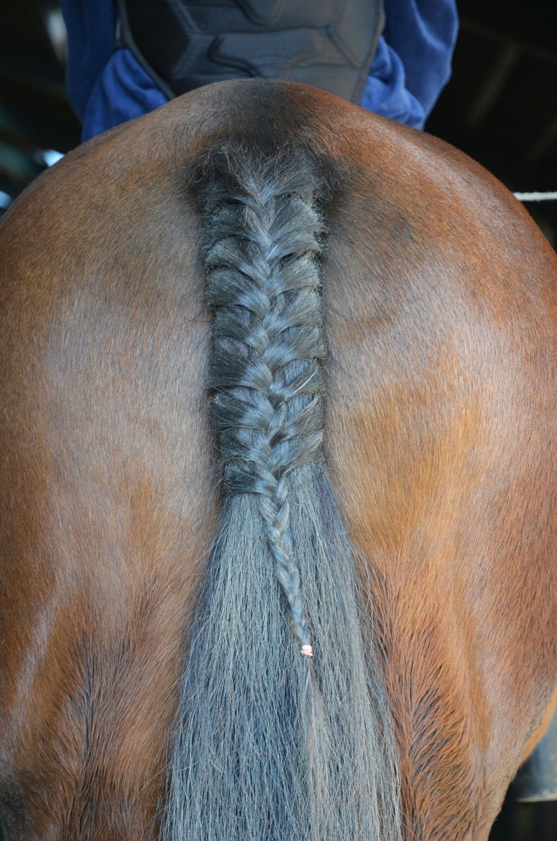 A Braided Horse Tail