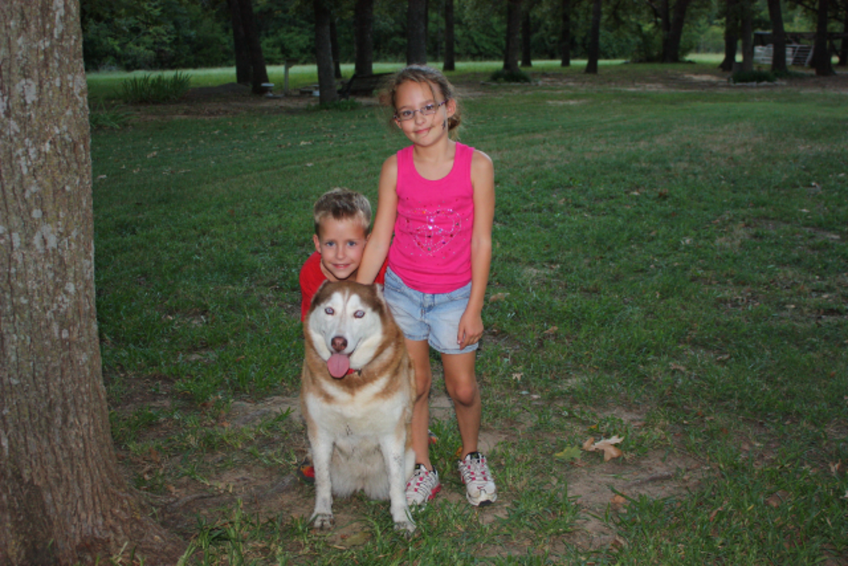 Our grandchildren with our husky.
