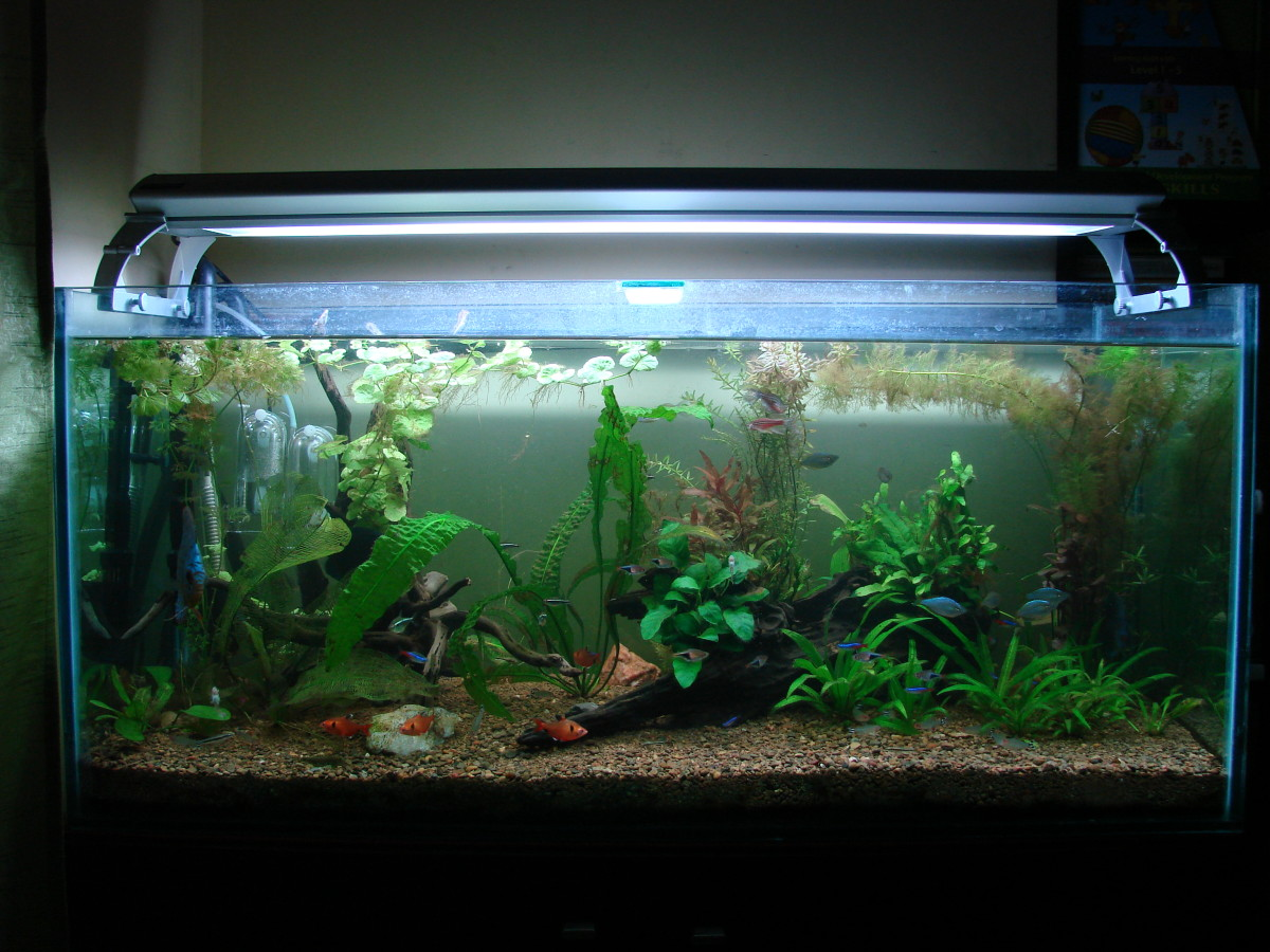 The newly setup aquarium a few weeks later...no fatalities. Thanks to the filter media 'transfer' from the old filter to the new one.