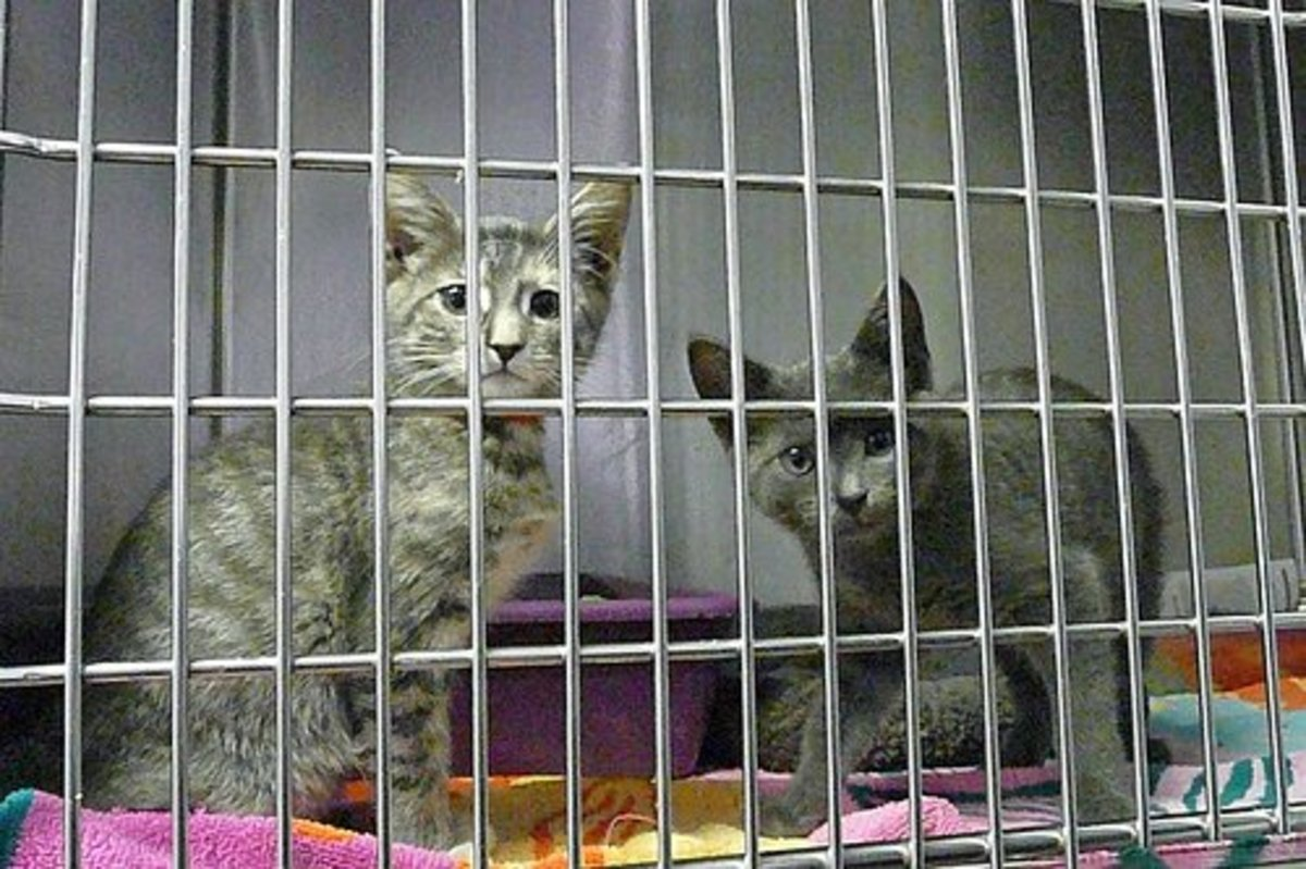Cats at the shelter