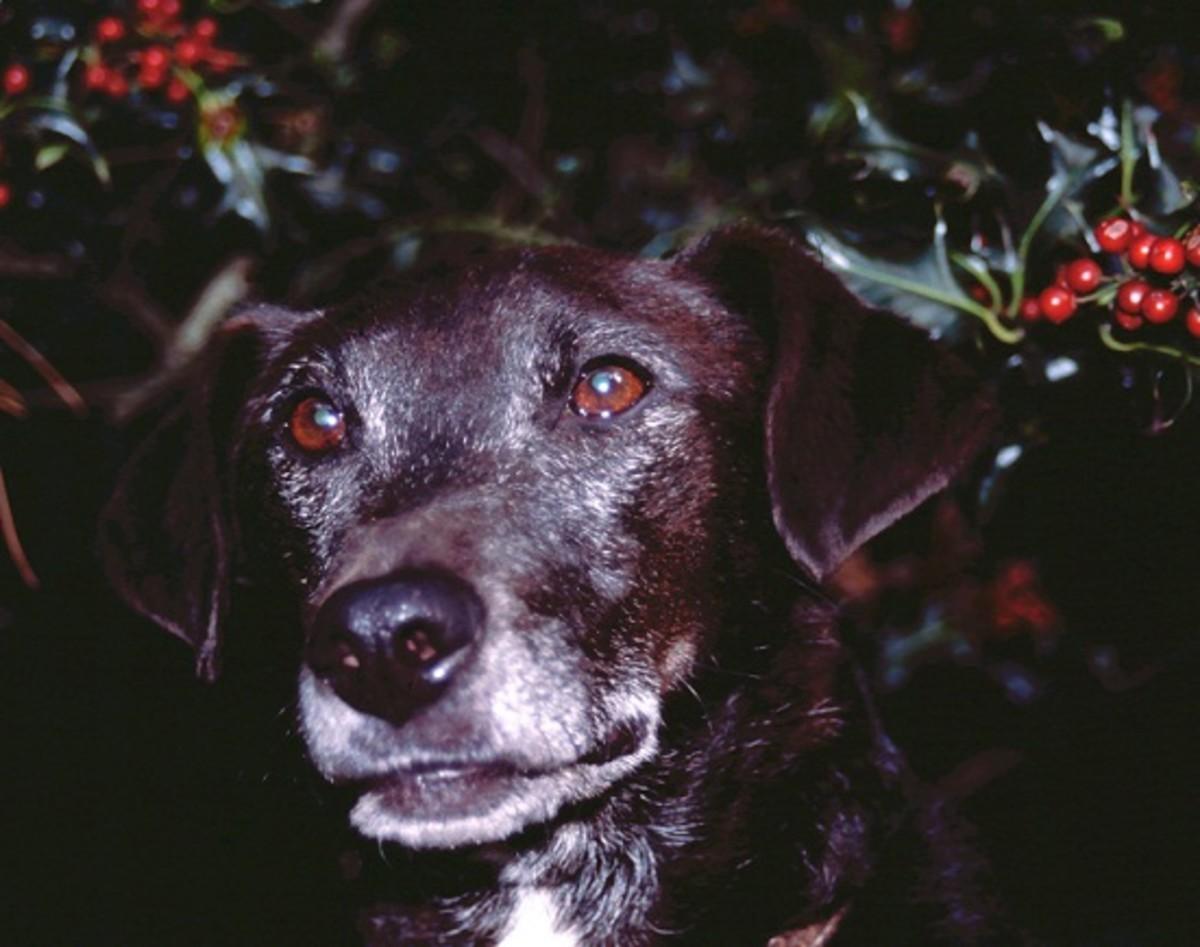 Roger, a terrier cross.