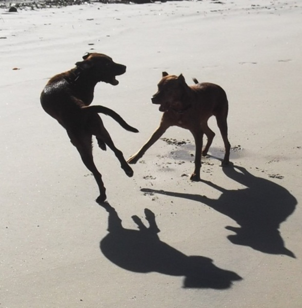 My dog and her sister on the beach.