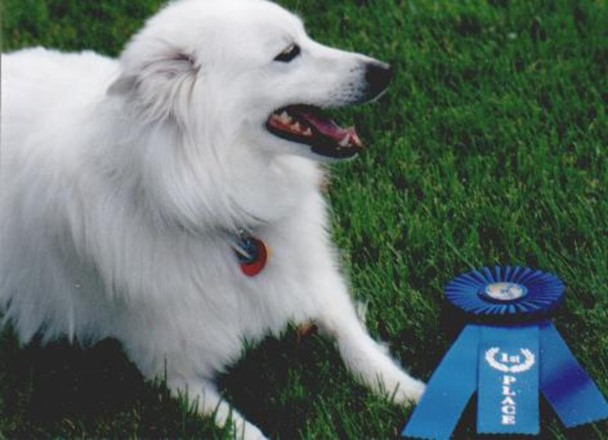 Laika with her first blue ribbon earned in obedience competition.