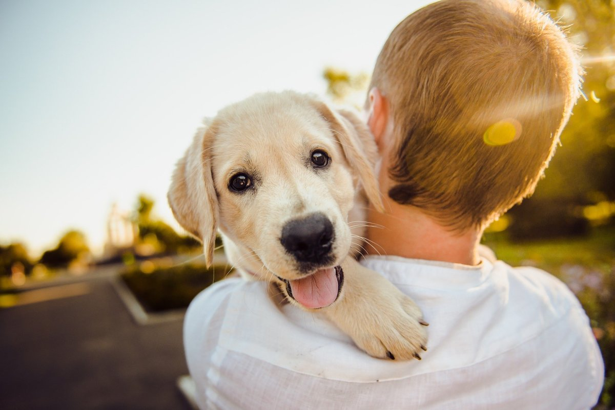 Teach you child to be gentle with Puppy.