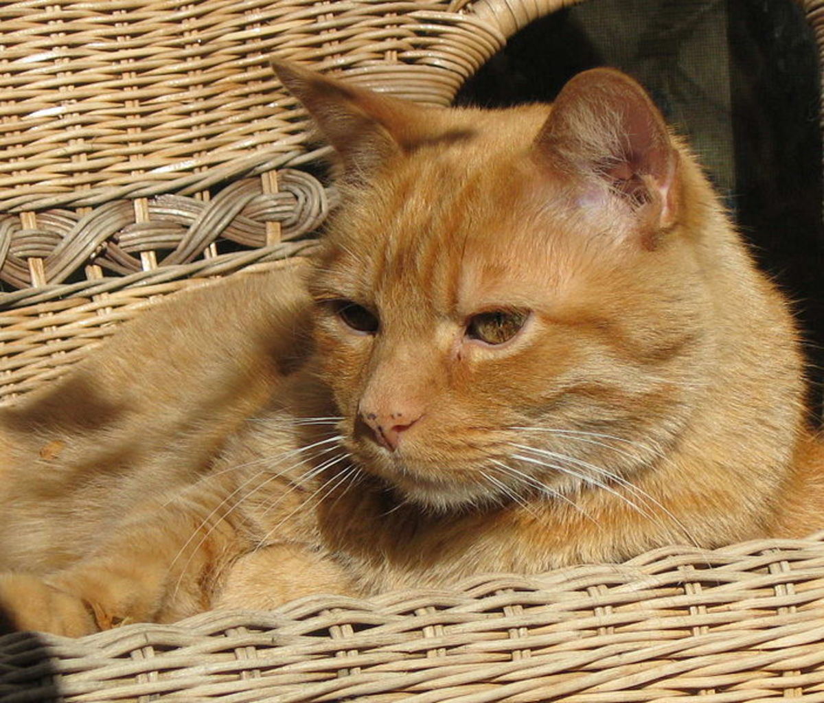 Popular Names For Male Ginger Cats