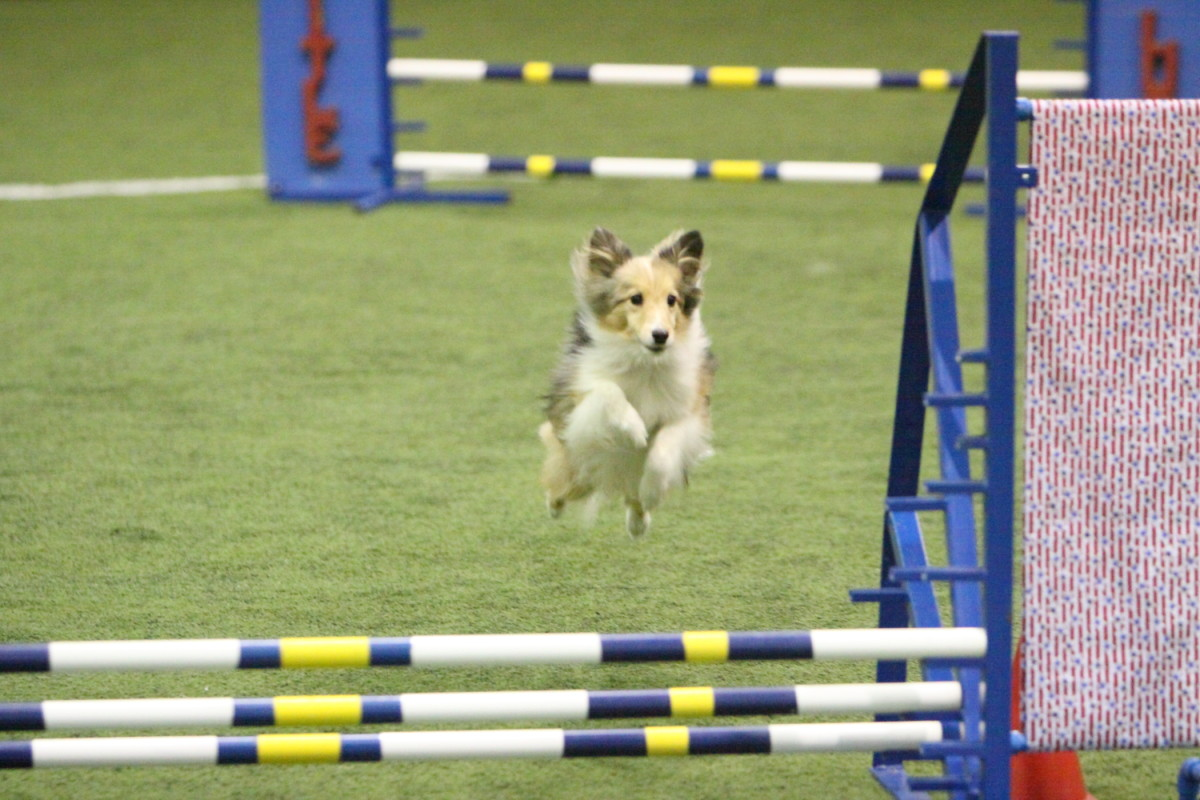 Aslan jumping over the triple spread jump.