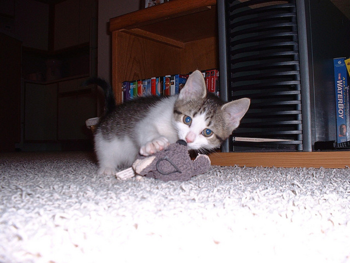 Kittens are much more susceptible to the virus.