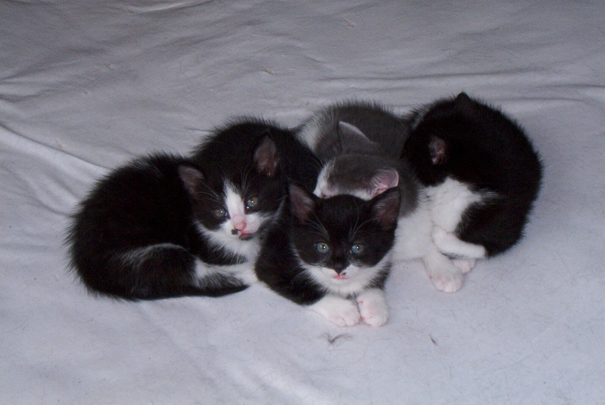 The FeLV vaccination is a two part series that is given to kittens at eight weeks old, and again three weeks later.