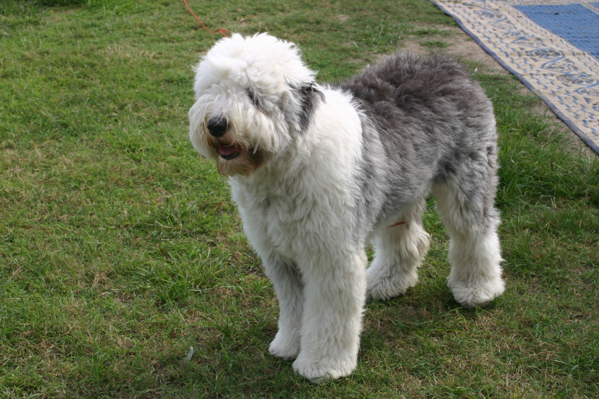 Canine overactive bladder