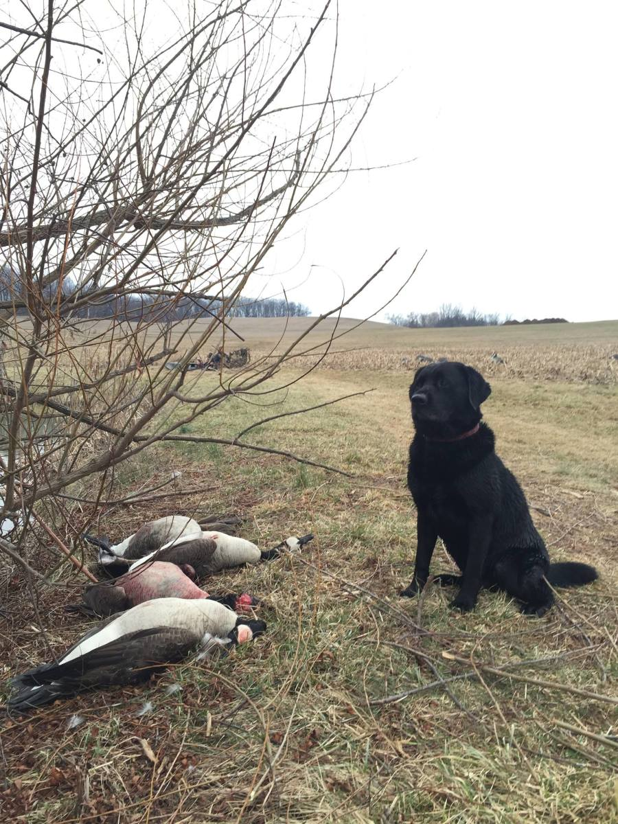 Duckie: At home in the field.