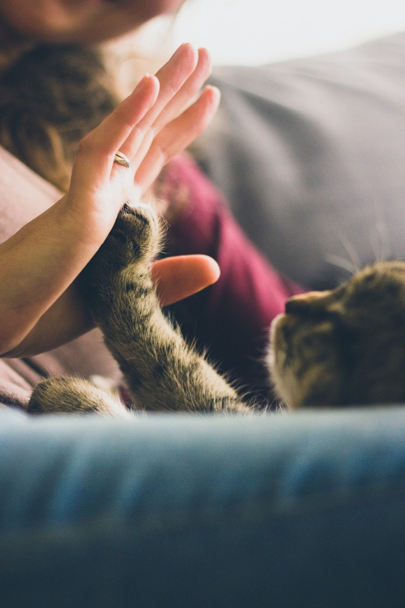 Cats love your undivided attention