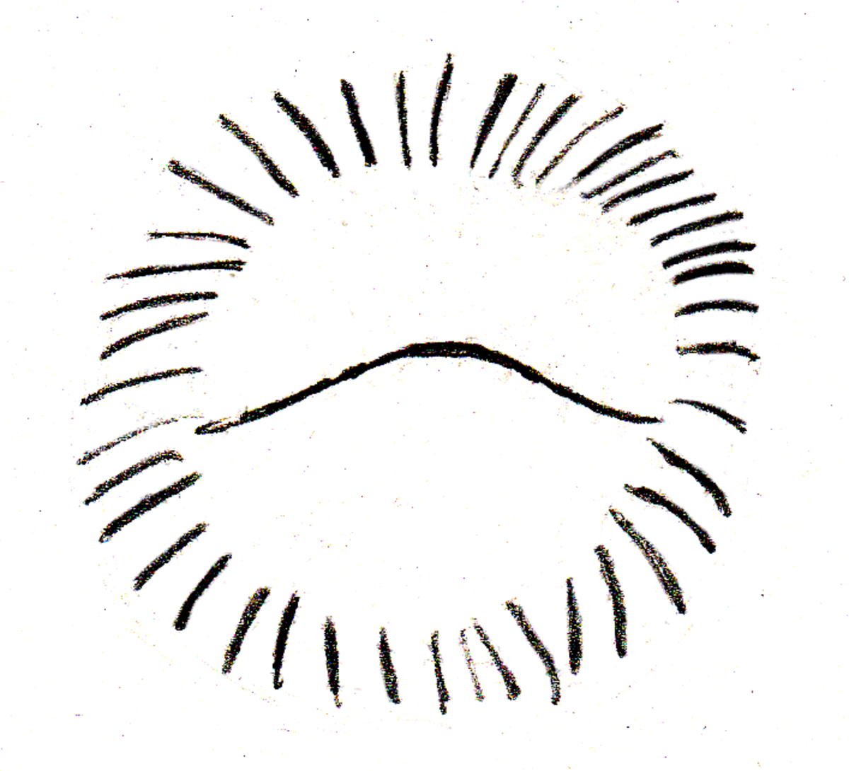 Balled Hedgehog: What you can see of an alarmed hedgehog (that line in the middle is what the face, belly, and feet  disappeared into)