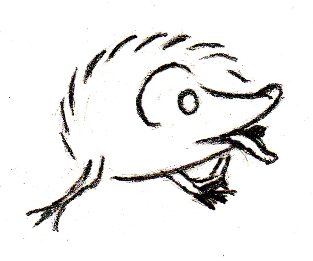By extending a long tongue and literally bending over backward, there doesn't seem to be any part of itself a hedgehog can't reach with foaming saliva...