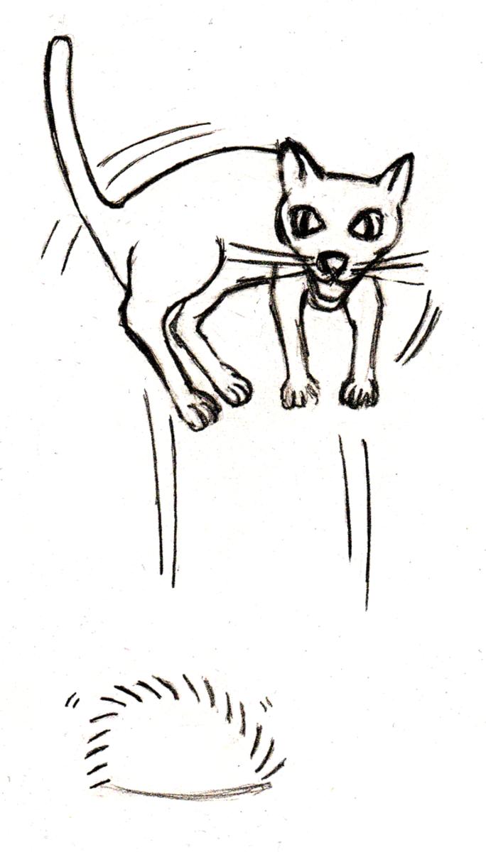 Hedgehog-Cat Interaction