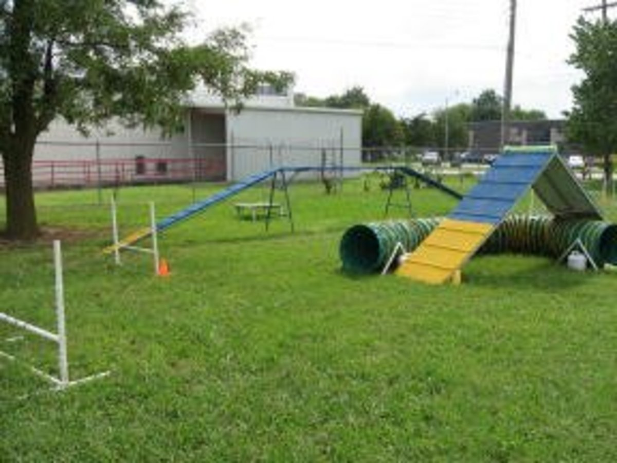 This agility school has a secure, outdoor location with a grass surface.