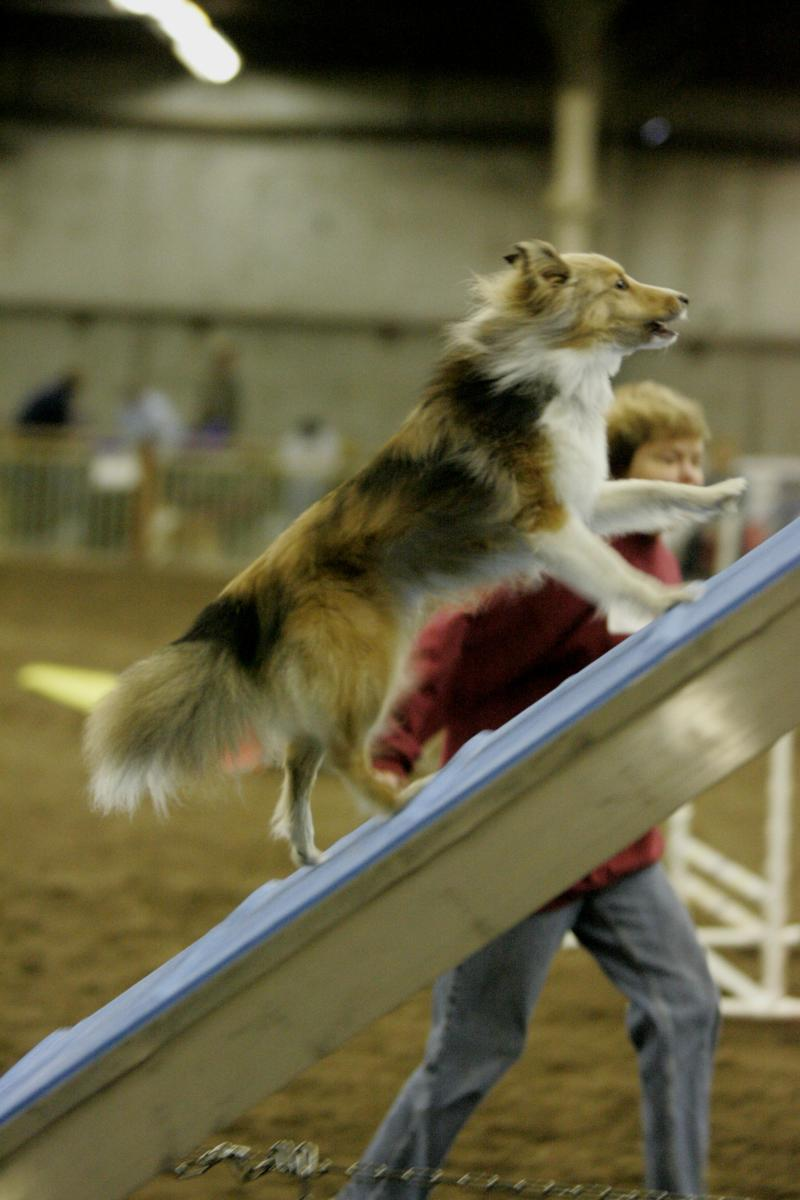 How to Find the Right Agility Instructor for You and Your Dog