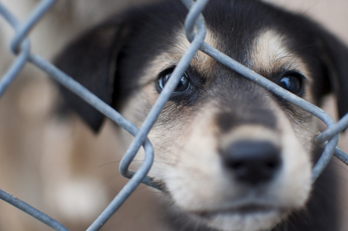 "A ""free to good home"" puppy may have started out life roughly and may not actually be free."